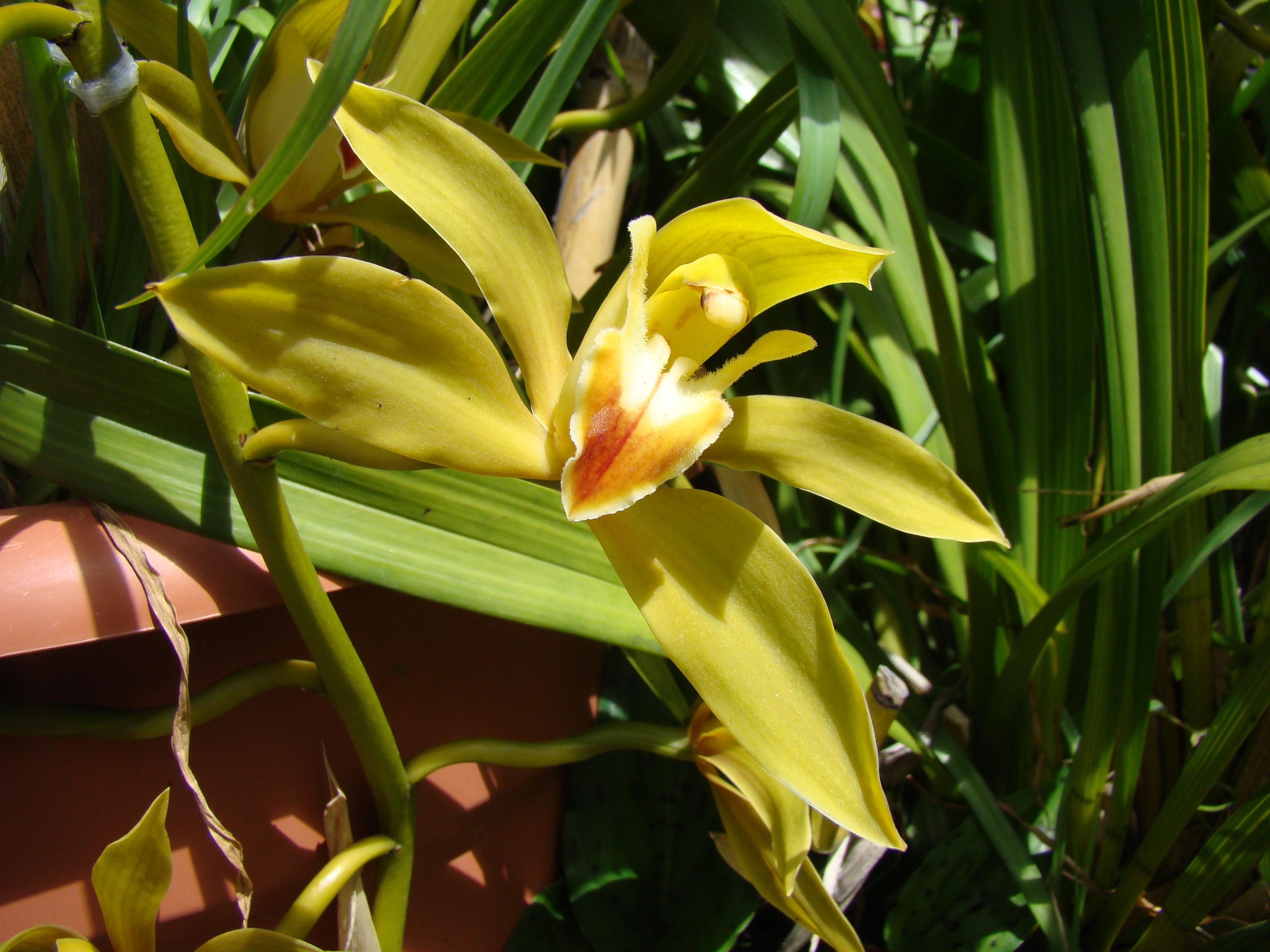 #212304  de Madeira creciendo a pleno sol en un cubo de plástico. Pero 3264x2448 px caixas de madeira para orquideas @ bernauer.info Móveis Antigos Novos E Usados Online