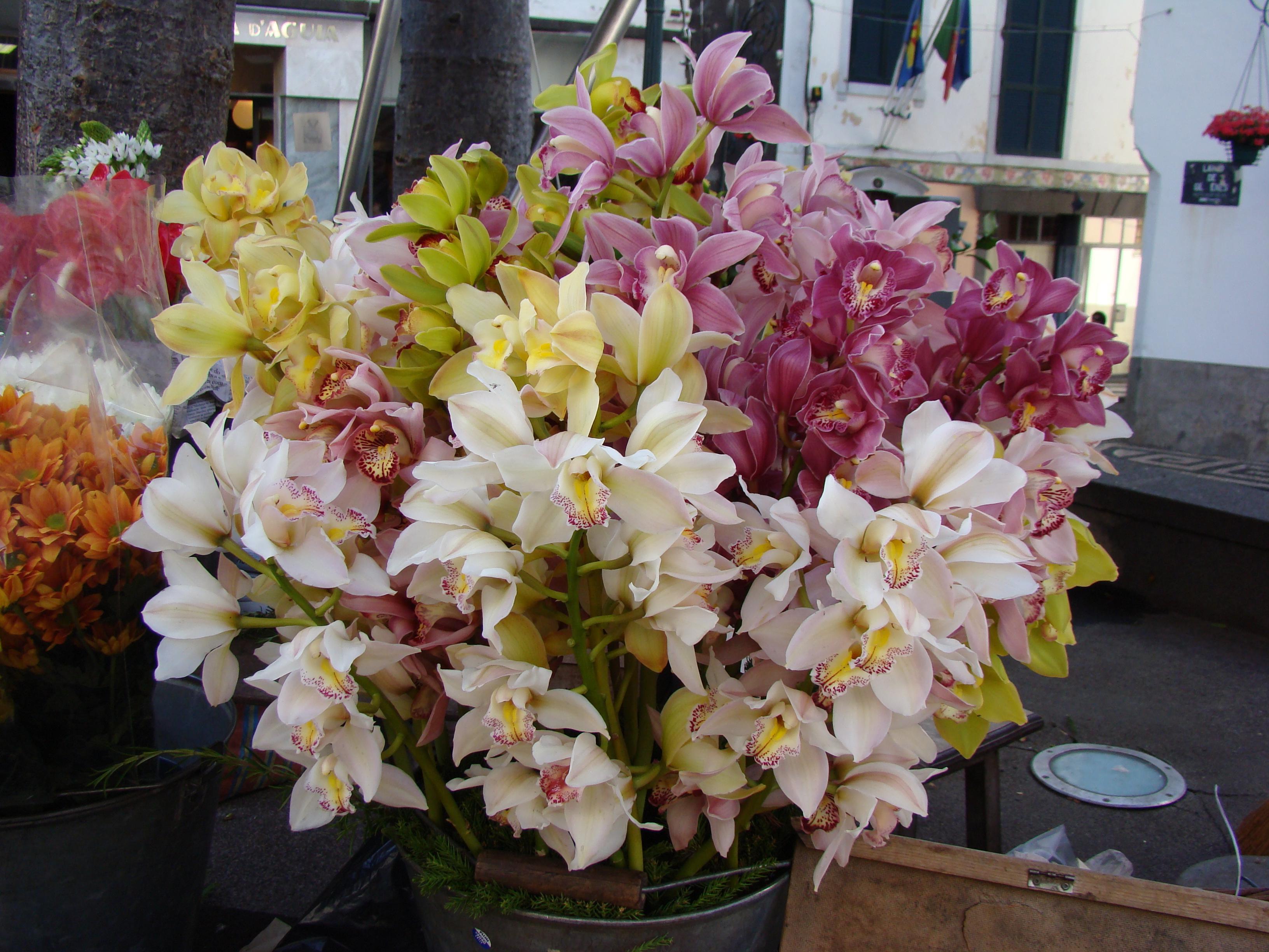 #87732F  son Cymbidium vendidas en cualquier calle por las calles de Funchal 3264x2448 px caixas de madeira para orquideas @ bernauer.info Móveis Antigos Novos E Usados Online
