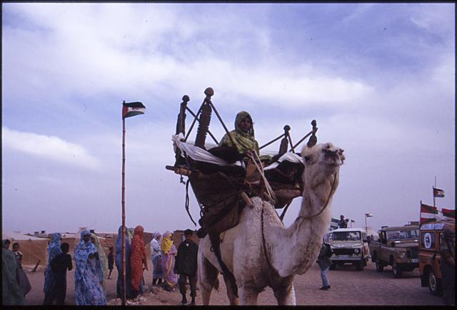 wilaya_aaiun_caravana_paz_tinduf